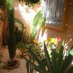 villa vendre Essaouira immobilier : jardin